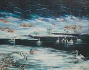 Trumpeter Swans & First Snowfall